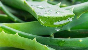 aloe vera za prirodno liječenje išijasa